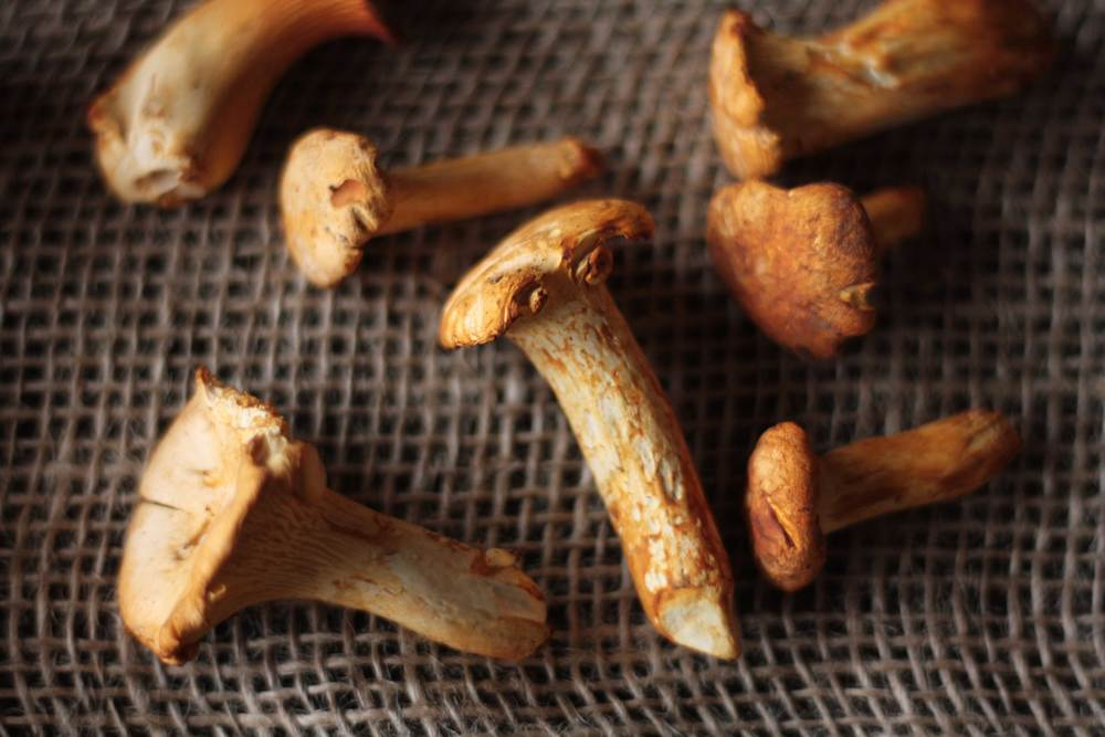 Close up of chanterelle mushrooms