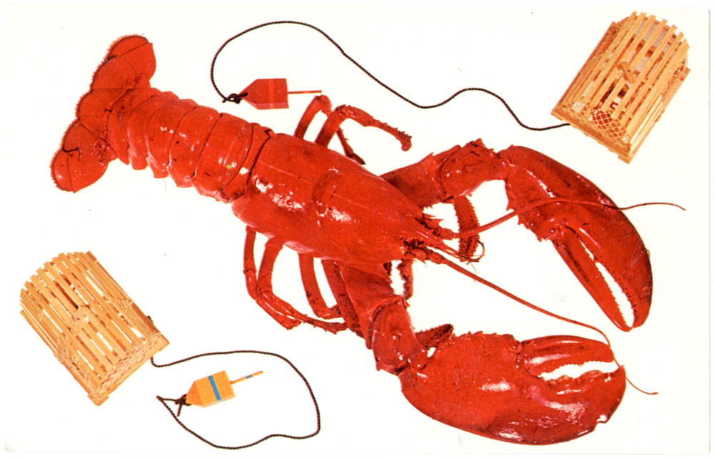 """A Maine Lobster"" Camden, Maine"