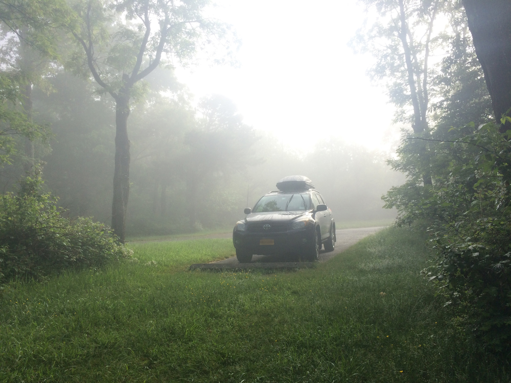 Rosie and the fog