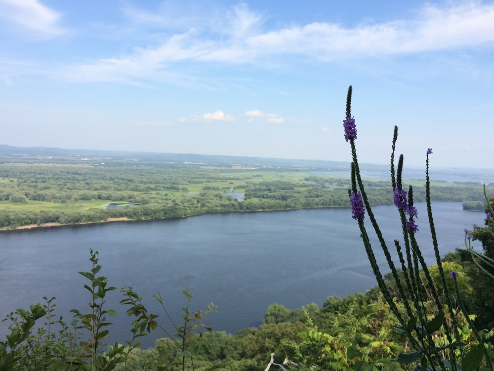 Flowers and the River -  Great River Bluffs State Park - Winona, Minnesota