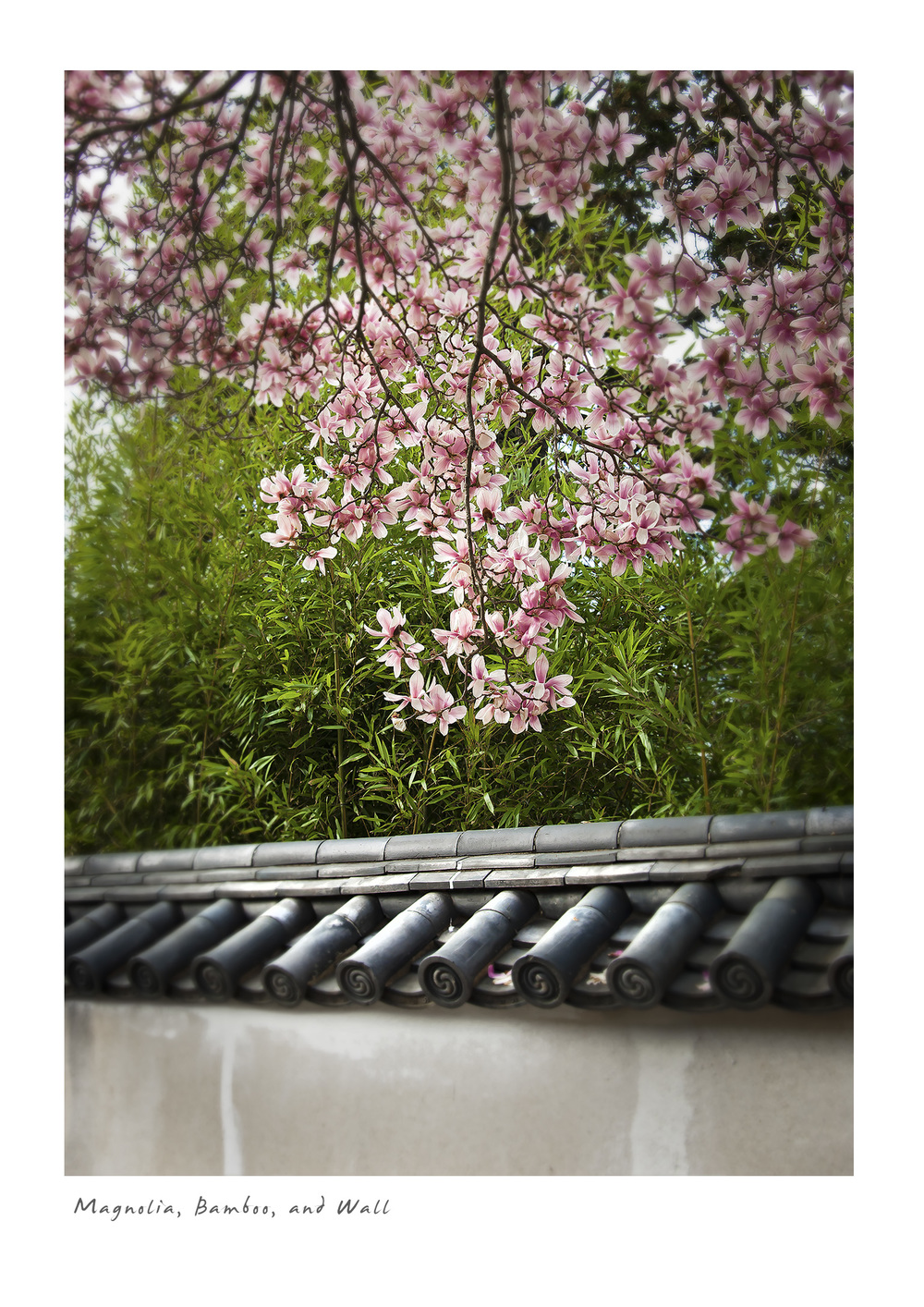 Magnolia, Bamboo, and Wall