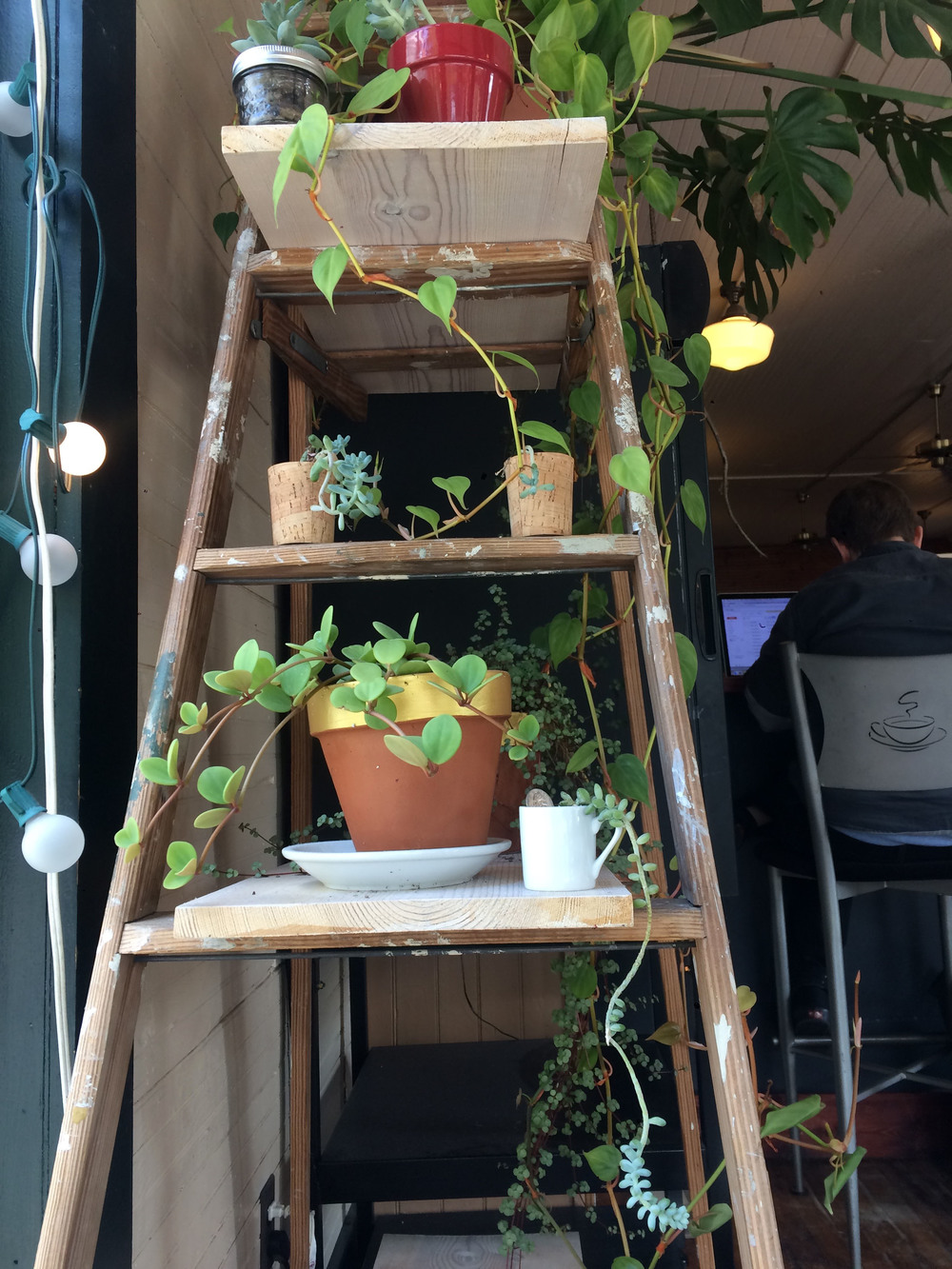 really cute plant ladder thing happening at the sparrows