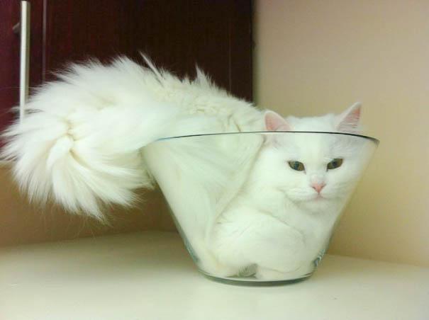 funny-liquid-cats-21.jpg