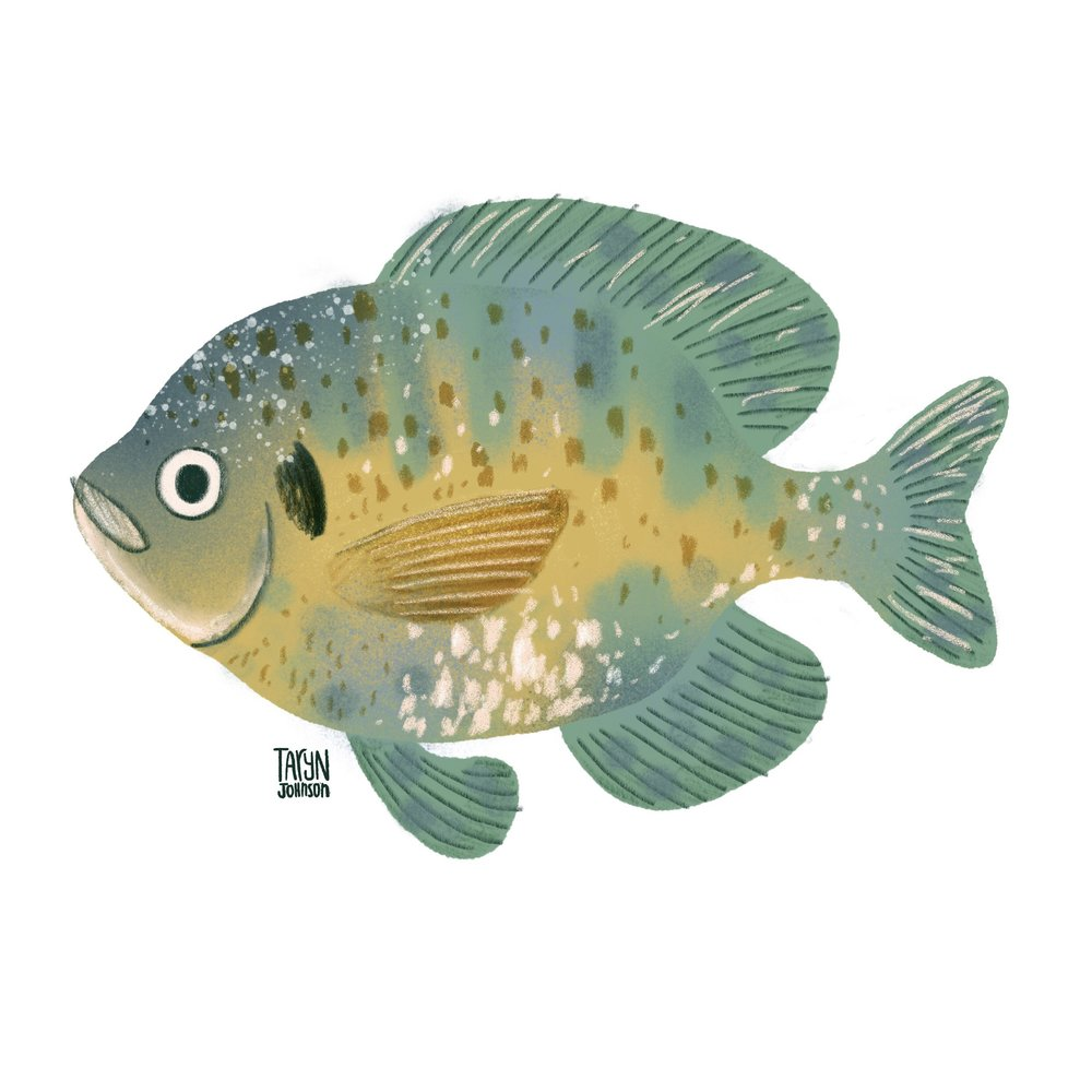 2/100 a bluegill fish