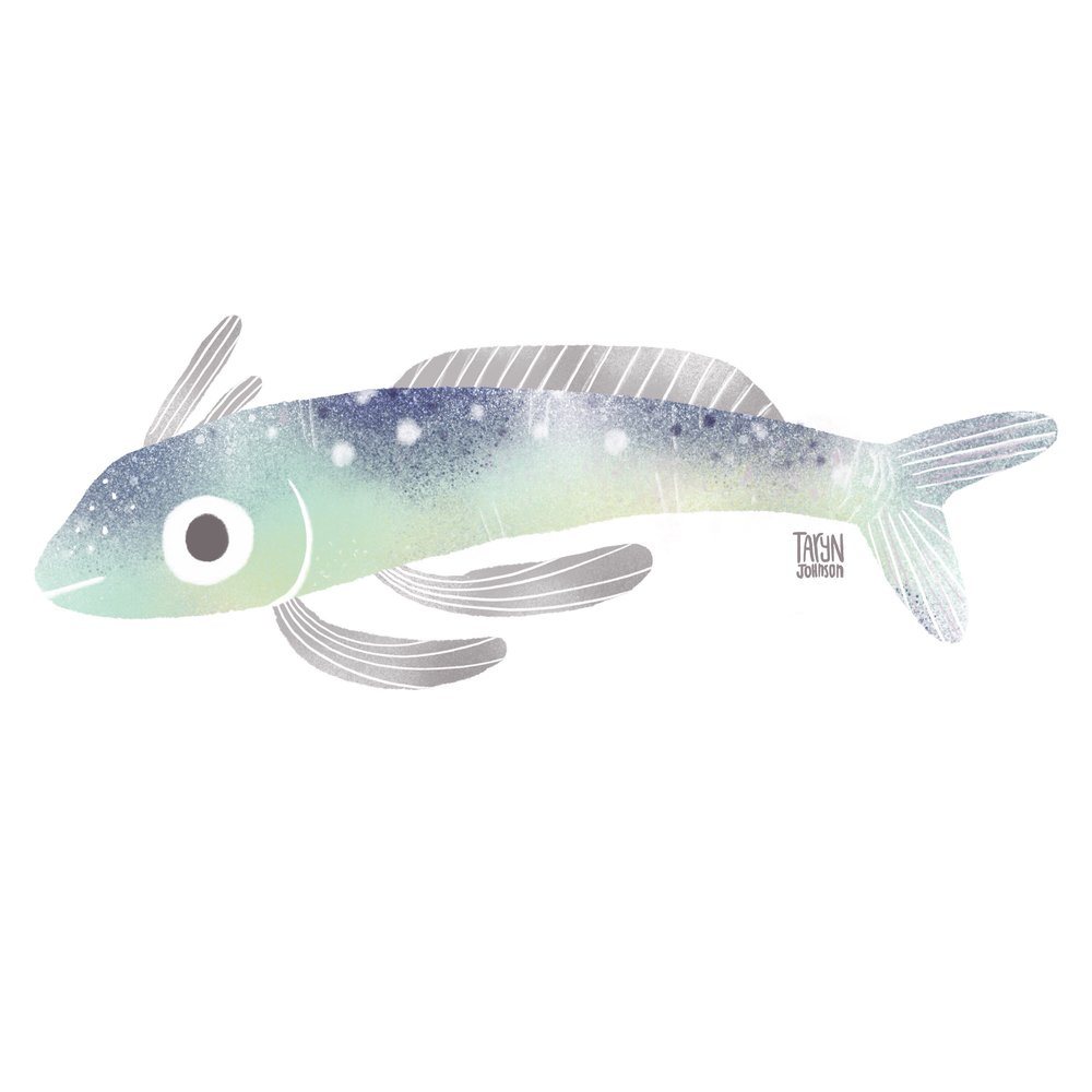 8/100 a ghostly fish