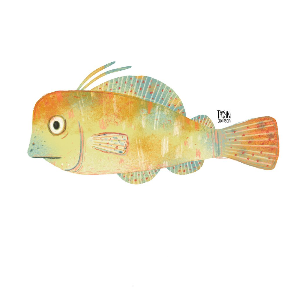11/100 a yellow-ish fish