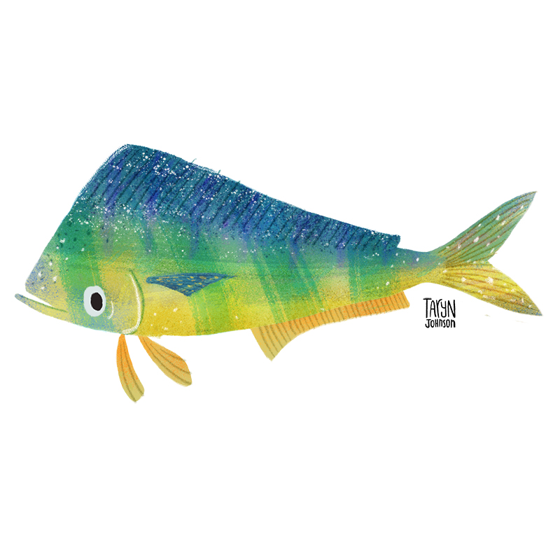 Fish026_tarynjohnson.jpg