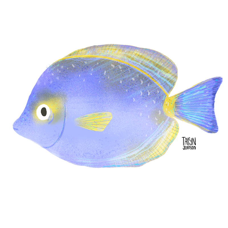 Fish036_tarynjohnson.jpg