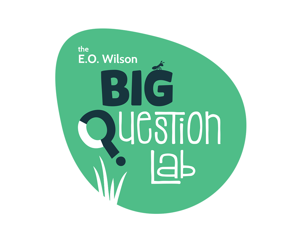 The Big Question Lab Logo Design