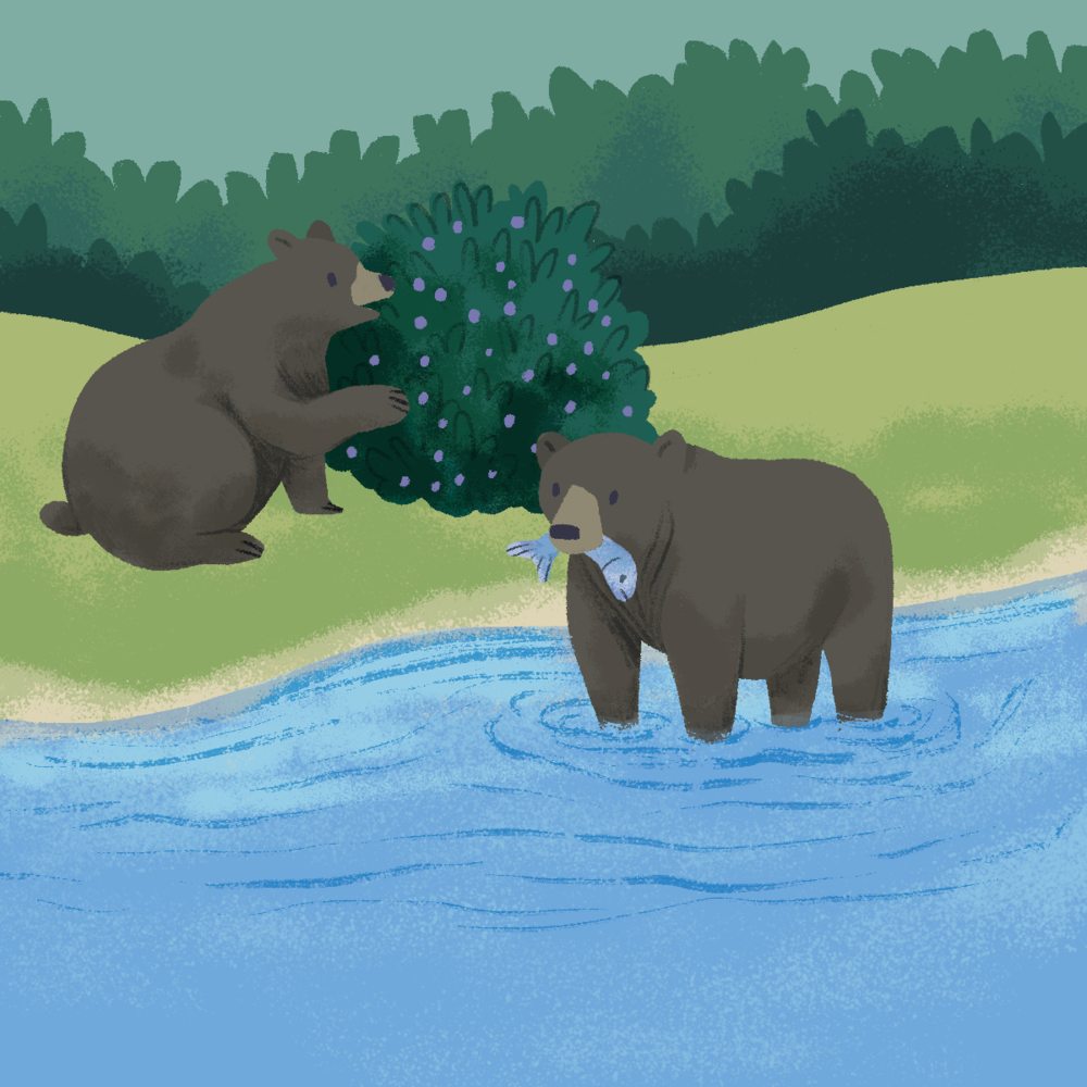 TAKS_08_61_bears_eating.png