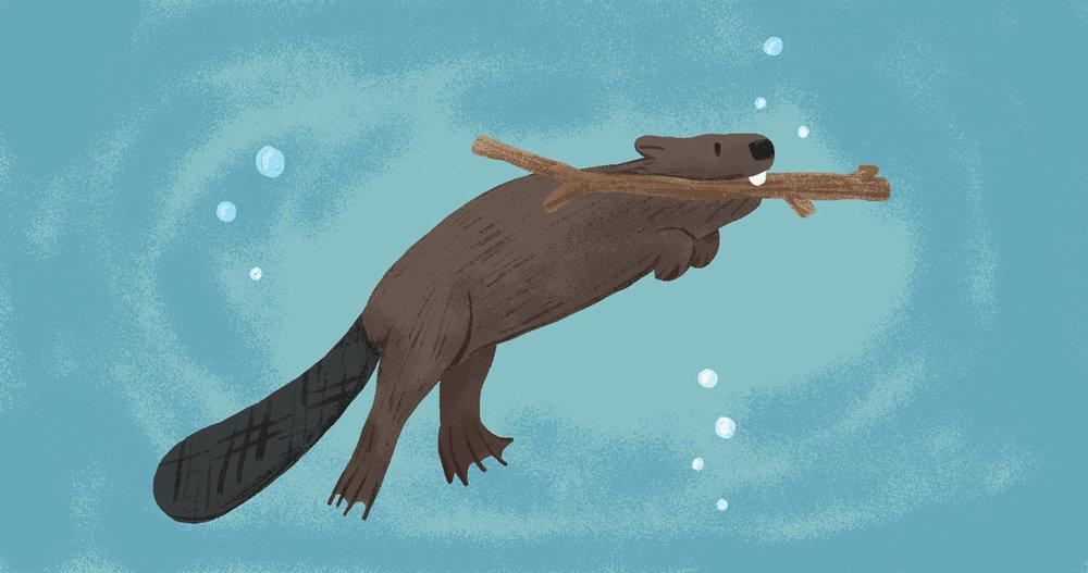 beaver_forweb.jpg
