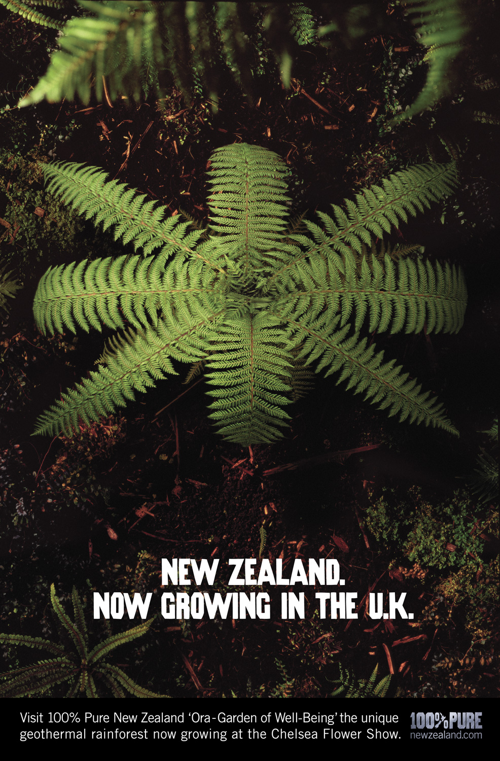 Poster campaign - Tourism New Zealand