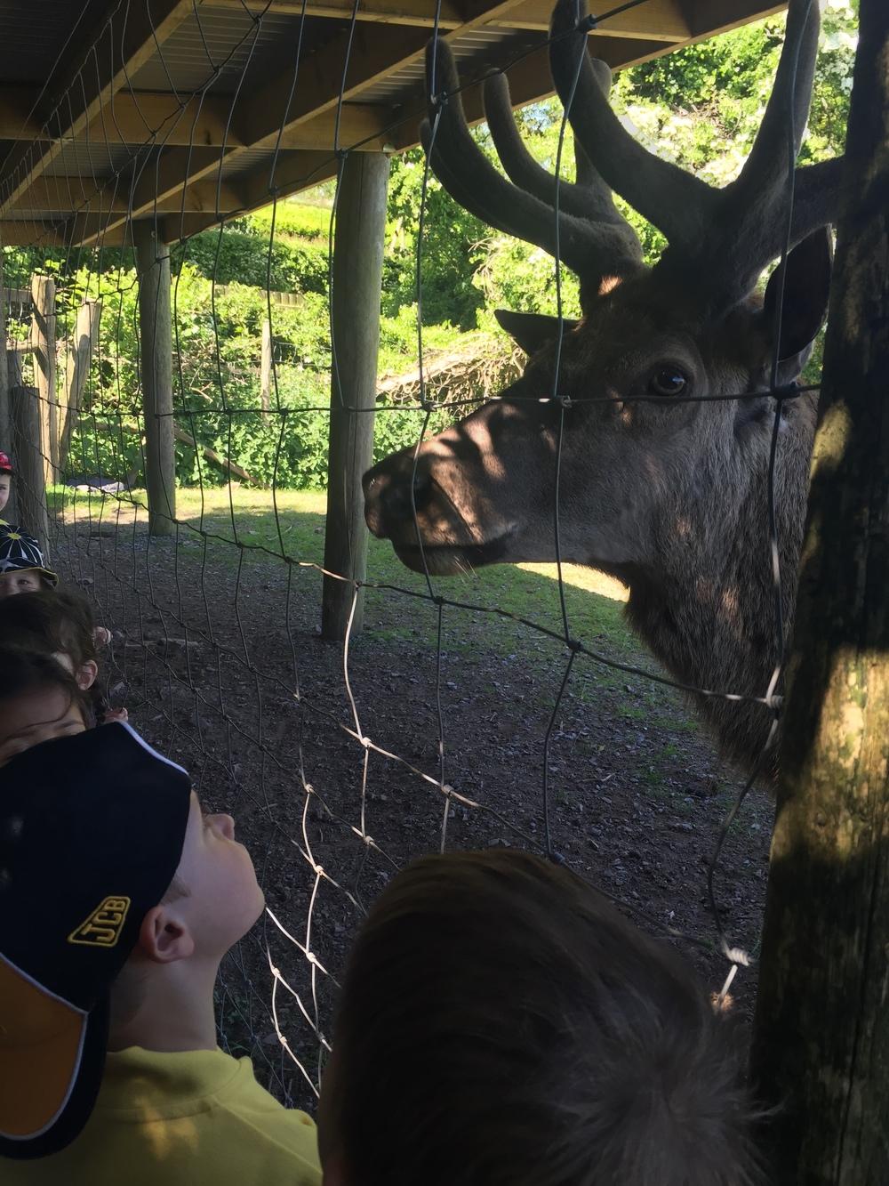 Saying hello to the deer
