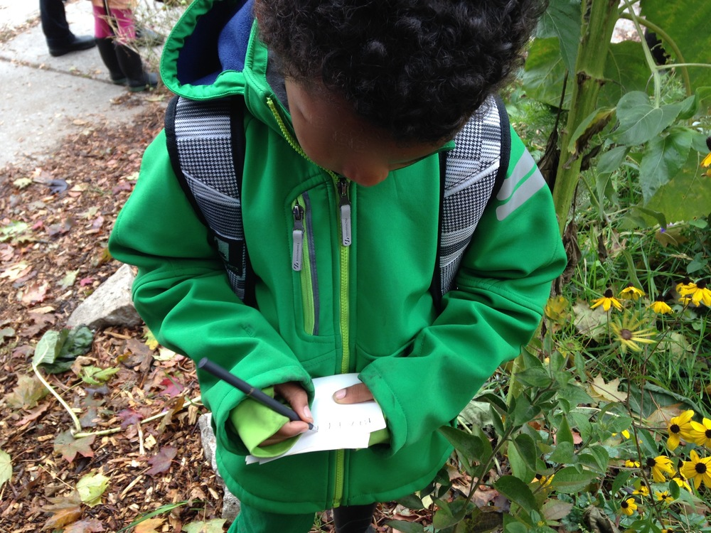A student records the types of seeds he collected from a local wildflower garden.