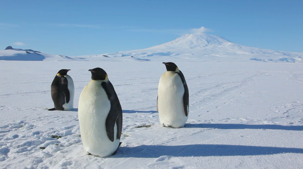 screen shot from Anthony Powell's Antarctica: A Year On Ice