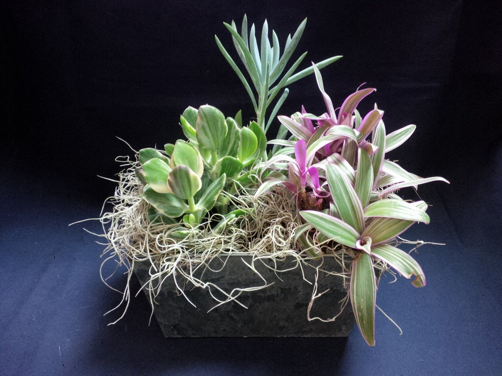 Collections of Indoor Plants