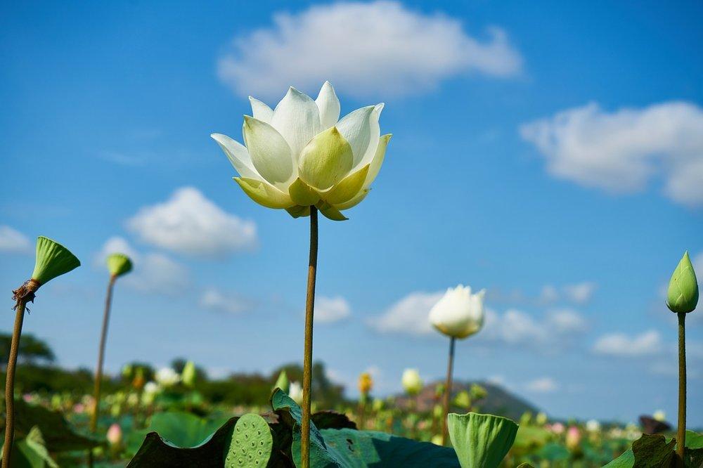 a-lotus-connection-yoga-retreat-chiang-mai.jpg