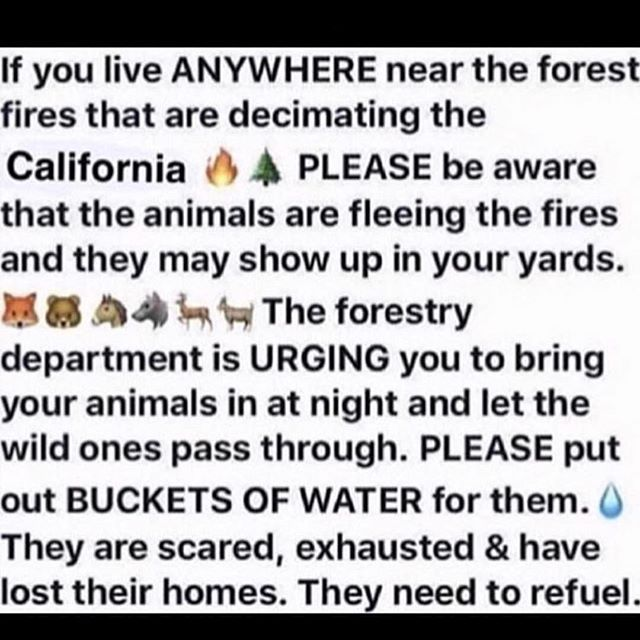 My prayers are with you all. Please get to safety. #savetheanimals #lafire