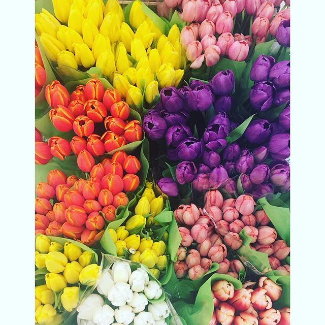 #springtime #tulips #targettulips #itsalmosteaster