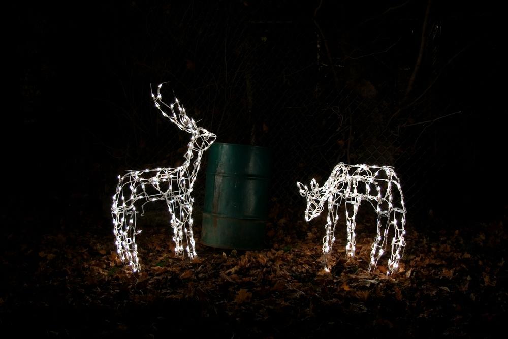 remi_thornton_runaway_reindeer.jpg