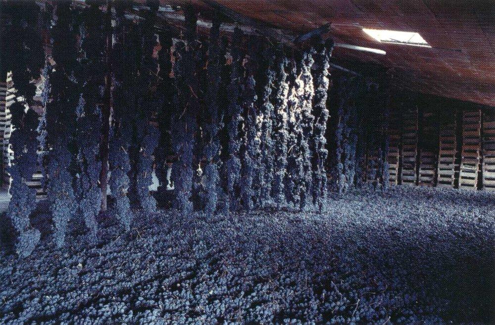 Het drogen van de druiven amarone.jpg