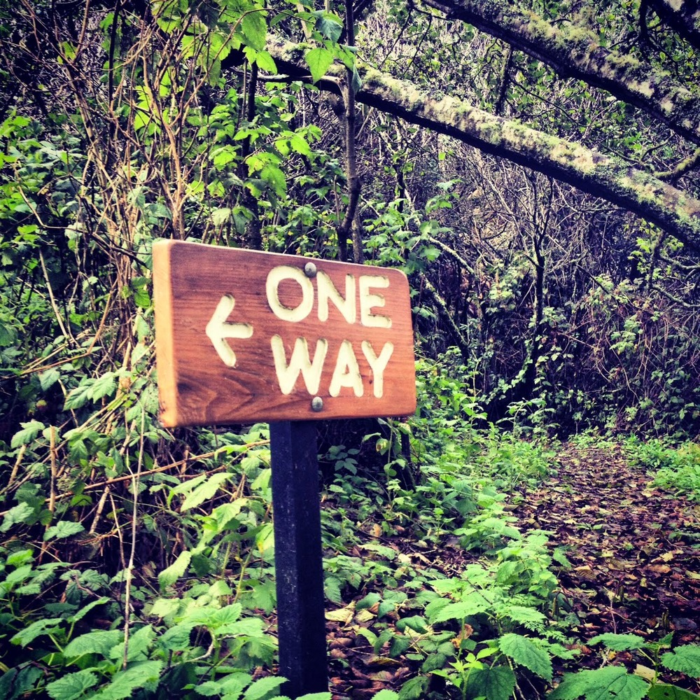 When I saw this at Point Reyes, I went the opposite way. #trailblazer