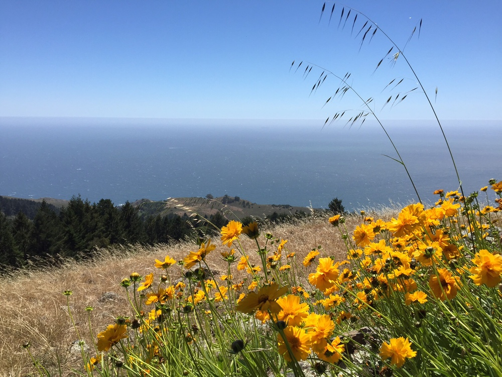 Matt Davis Trail, Mt. Tam