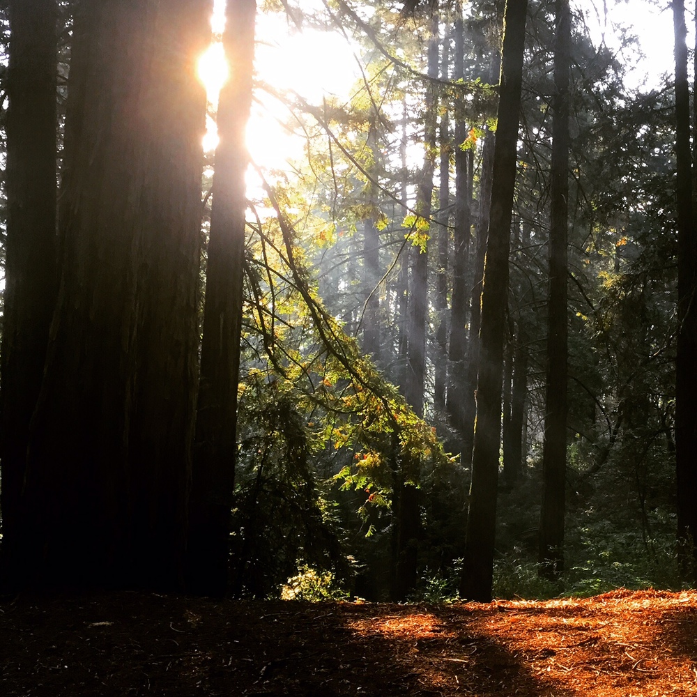 Captivating rays captured this morning after descending from Redwood Peak....