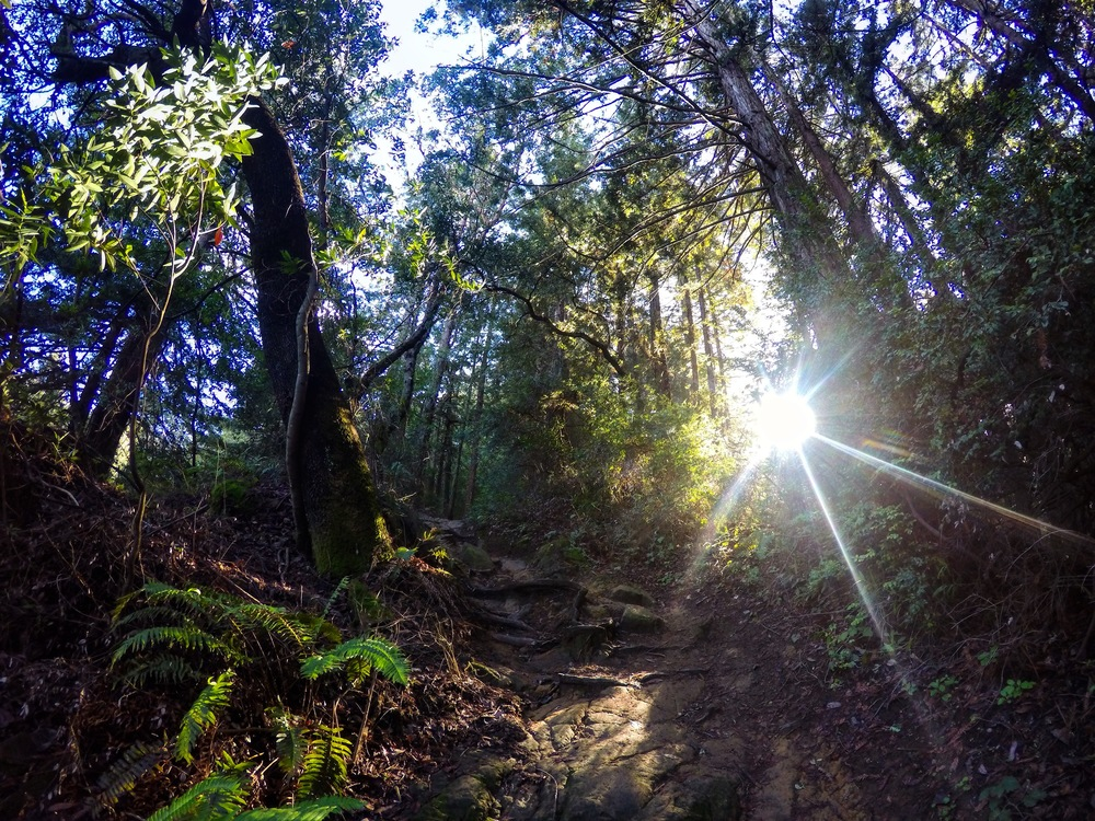 Revisiting old familiar trails with a friend this afternoon at Redwood Regional Park.