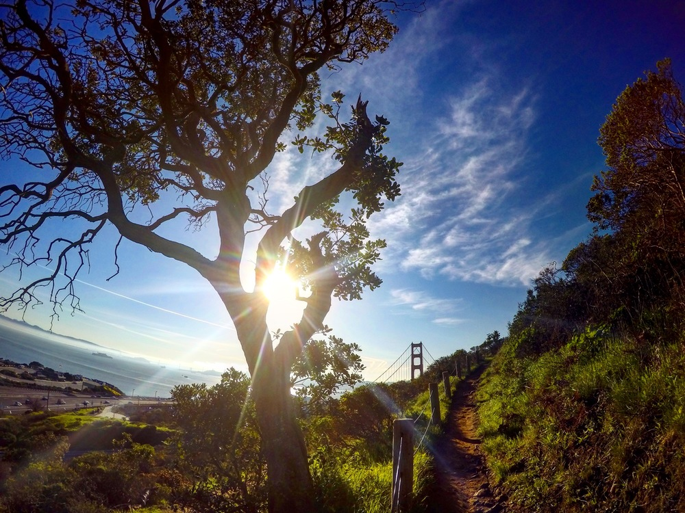 Discovering new parts of the Coastal Trail in Marin Headlands...