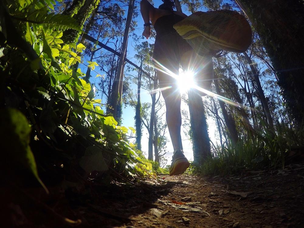 Morning Sun Trail, Marin Headlands
