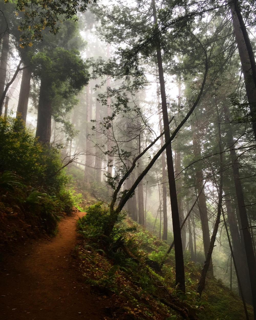 Ewoldsen Trail, Julia Pfeiffer Burns State Park