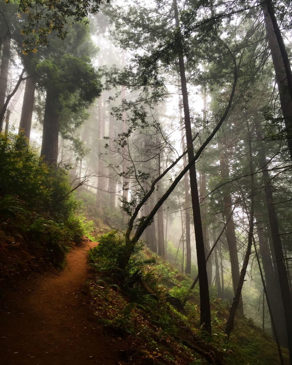 Ewoldsen Trail, Julia Pfeiffer Burns State Park