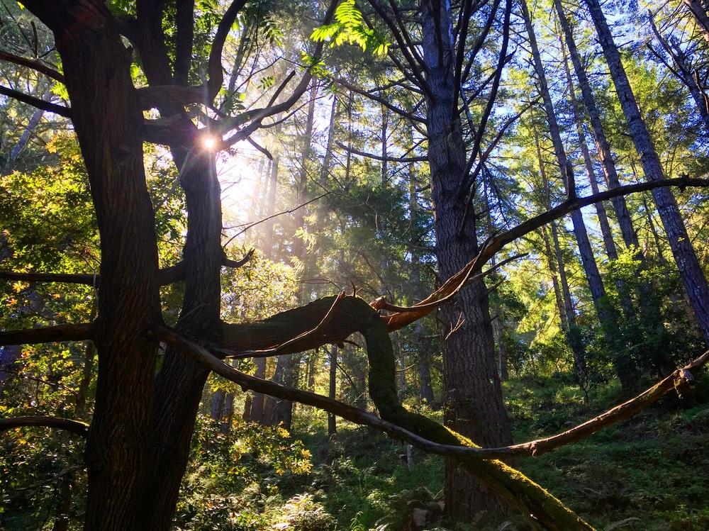 Goat Hill Trail, Butano State Park