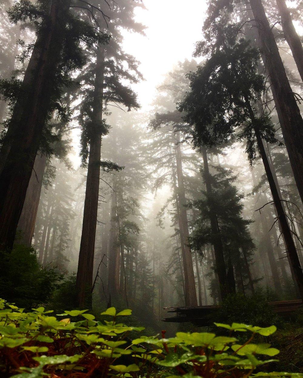 Julia Pfeiffer Burns State Park, Big Sur