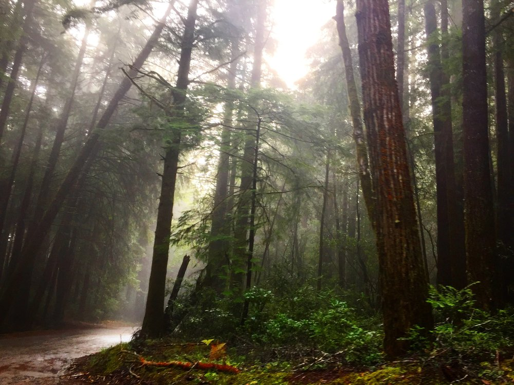 Mendocino Woodlands.