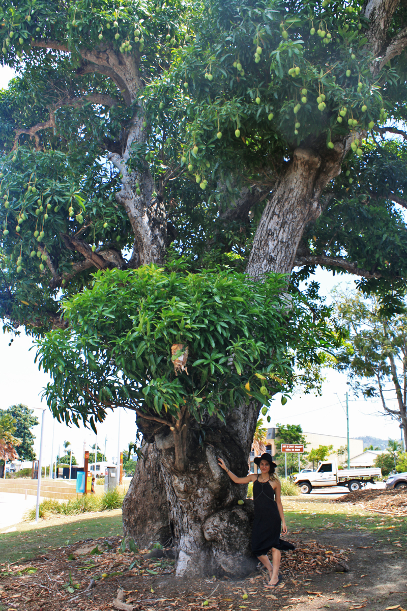 The ENARMOUR stall was right in front of this magnificent mango tree and I couldn't resist to take a photo to showcase its size!