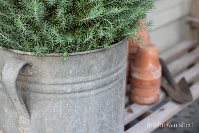 evergreen in vintage bucket | thebrownshed.com