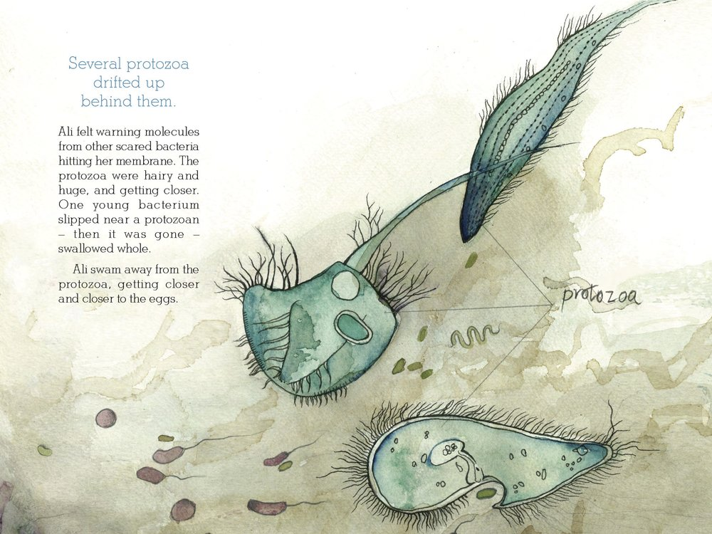 Selected page from The Squid, the Vibrio & the Moon. Written by Ailsa Wild, Illustrated by Aviva Reed and Created by Dr. Gregory Crocetti. Published by Scale Free Network, 2014.