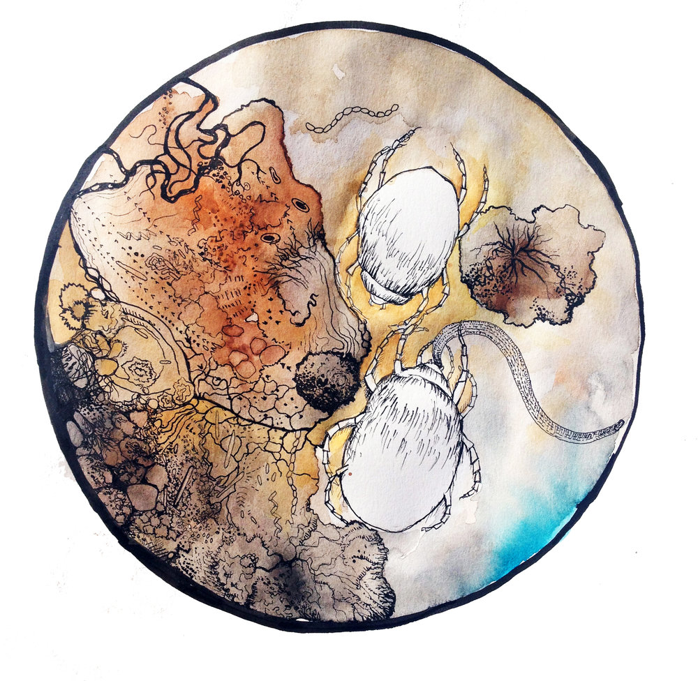 Mites attacking a nematode. Early sketches for Xenos' Feast by Aviva Reed.