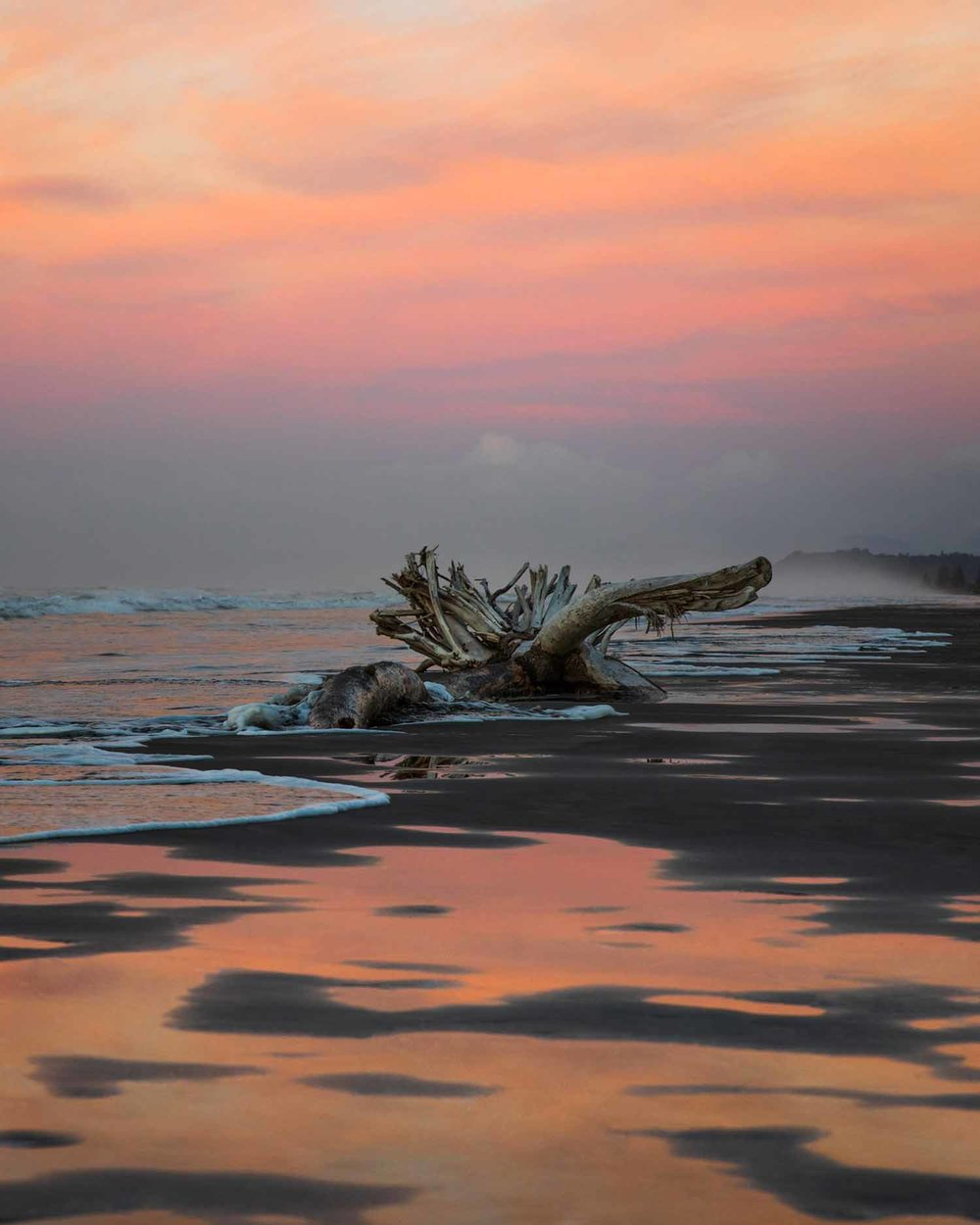 Washed-Up-Tree-at-Ohope-Beach-IV------Small.jpg