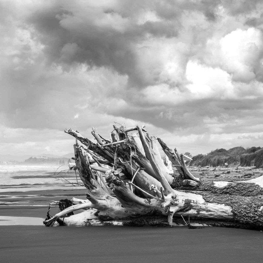 Washed-Up-Tree-At-Ohope-Beach-Image.jpg