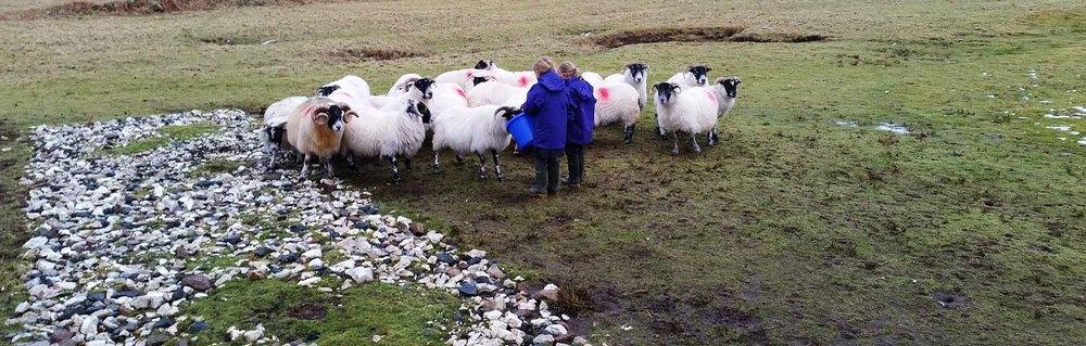 mairi-and-eilidh-feeding-the-sheep.jpg