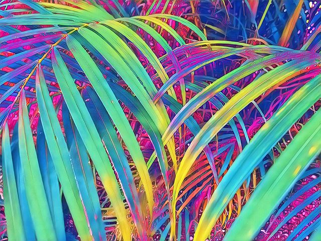 Take a wander through the psychedelic jungle.  #psychedelic #jungle #psyart #psychedelicadventure #psychedelicart