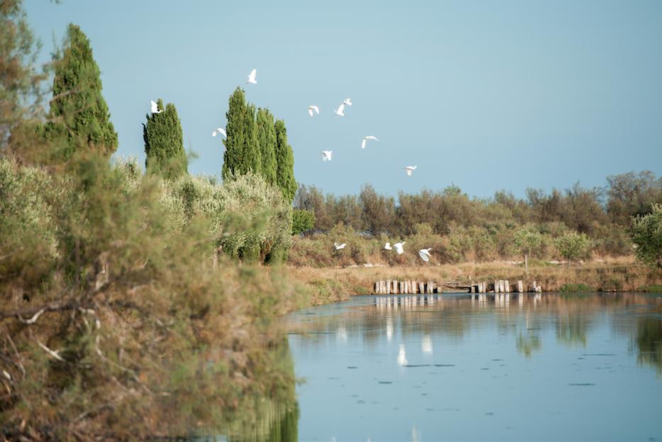 Birds_Lagoon copy.png