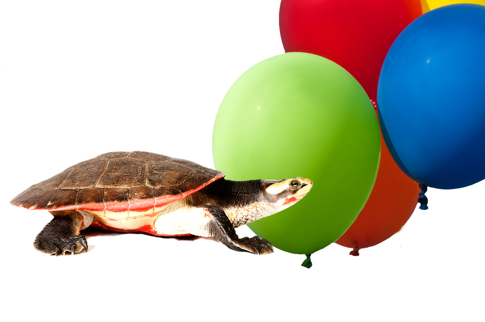 Fêtes D'anniversaires / Birthday Parties