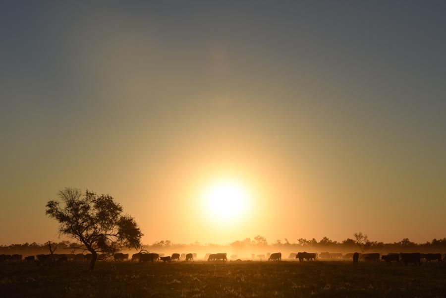 Outback181-64.jpg