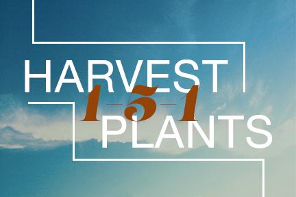 Harvest 151 Plants.jpg