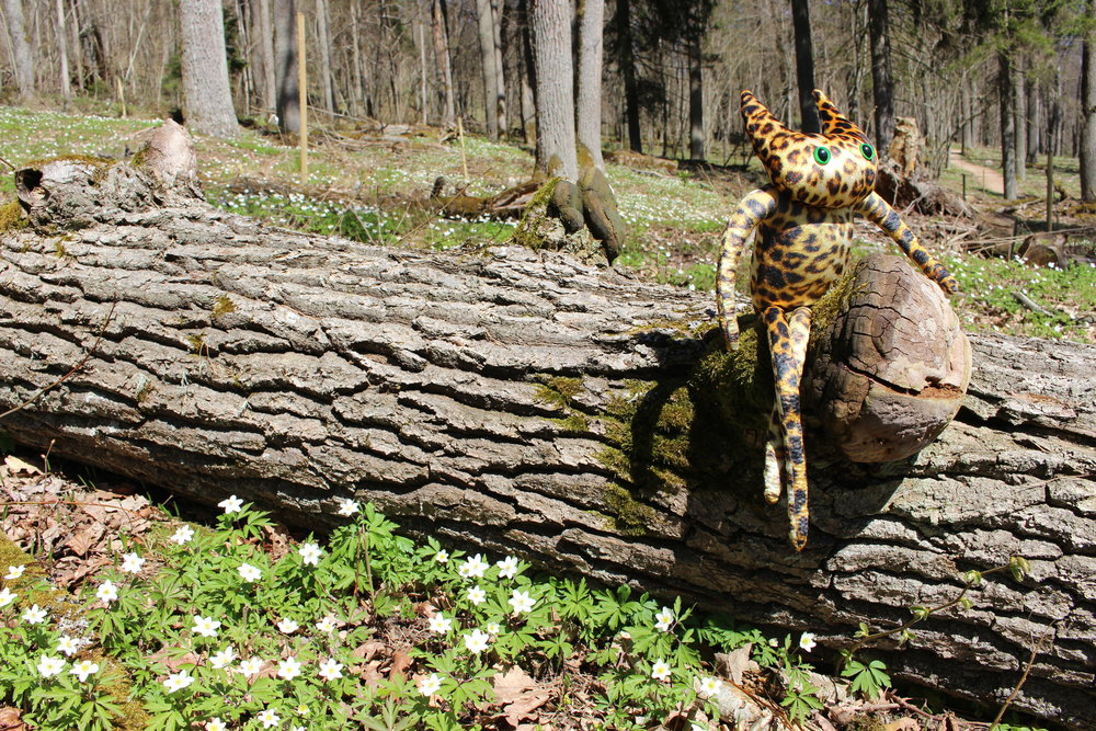 Shirley's guide to Gauja National Park - Wandering around the beautiful nature and writing some postcards is Shirley's antidote for homesickness.