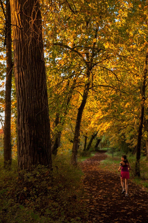 fall-1176411_1920.jpg